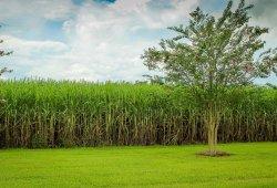 Avances en la producción de biocombustible de la mano de Toyota