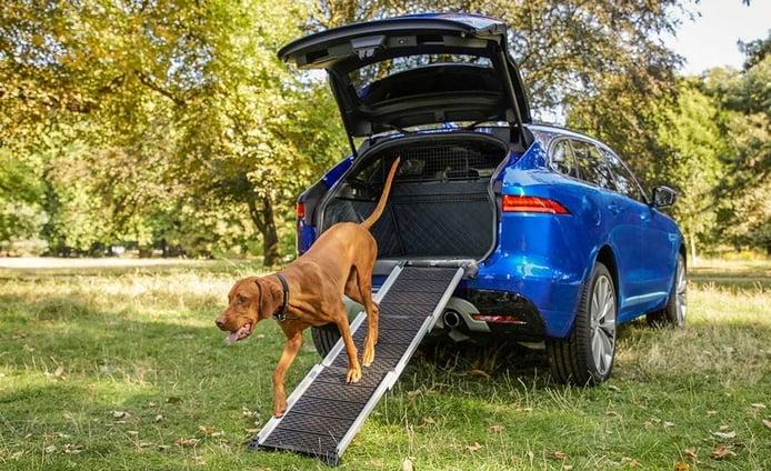 Jaguar quiere que nuestras mascotas viajen seguras y cómodas en el coche