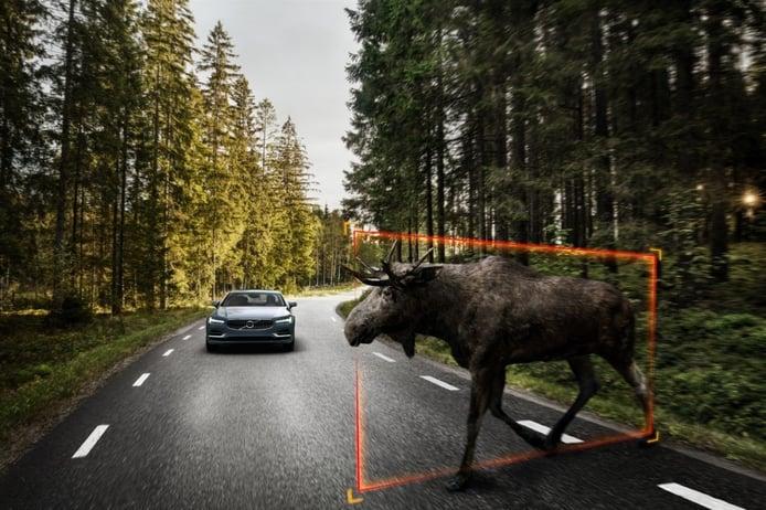 Un estudio demuestra la incapacidad de asistentes de conducción frente a los animales salvajes