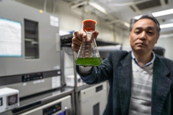 Mazda estudia la tecnología para producir un nuevo biocombustible a base de algas