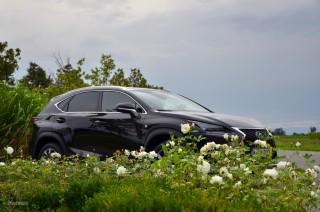 Fotos Lexus NX 300h, presentación Foto 31