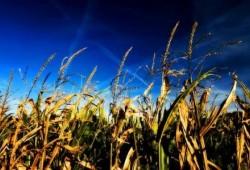 Biocombustibles de segunda generación prometen innumerables beneficios