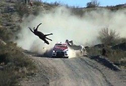Rally de Argentina: un caballo resultó atropellado