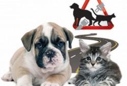 El transporte de mascotas a exámen