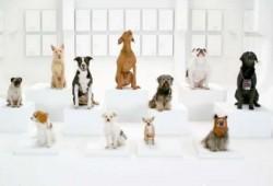Los perros de Volkswagen aúllan la canción de la Guerra de las Galaxias