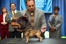 El perro mutante de Audi se anuncia en la Super Bowl 2014