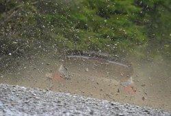 Sébastien Ogier cierra el WRC con victoria en Gales