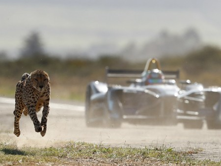 Fórmula E vs. guepardo: electricidad y naturaleza