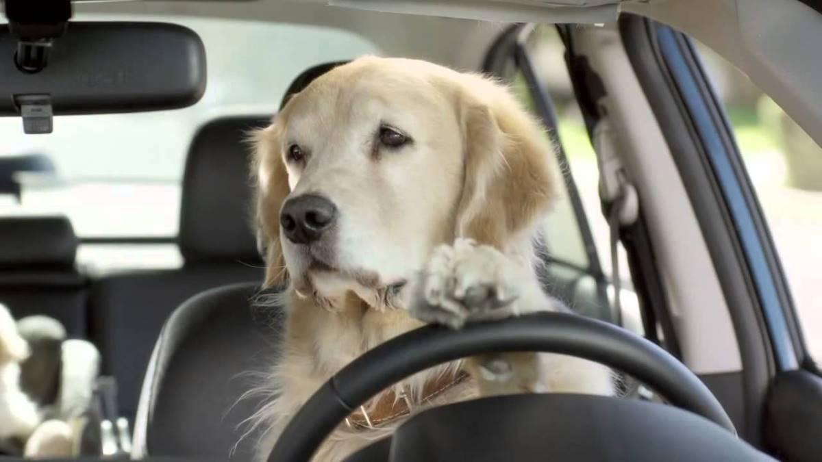 Viajar en coche con perro: leyes, información y accesorios necesarios