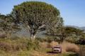 Thierry Neuville 'stretches' his Safari Rally lead against Takamoto Katsuta