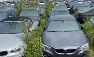 ¿El desguace más caro del mundo? Unos 3.000 BMW y MINI se pudren al sol en Canadá